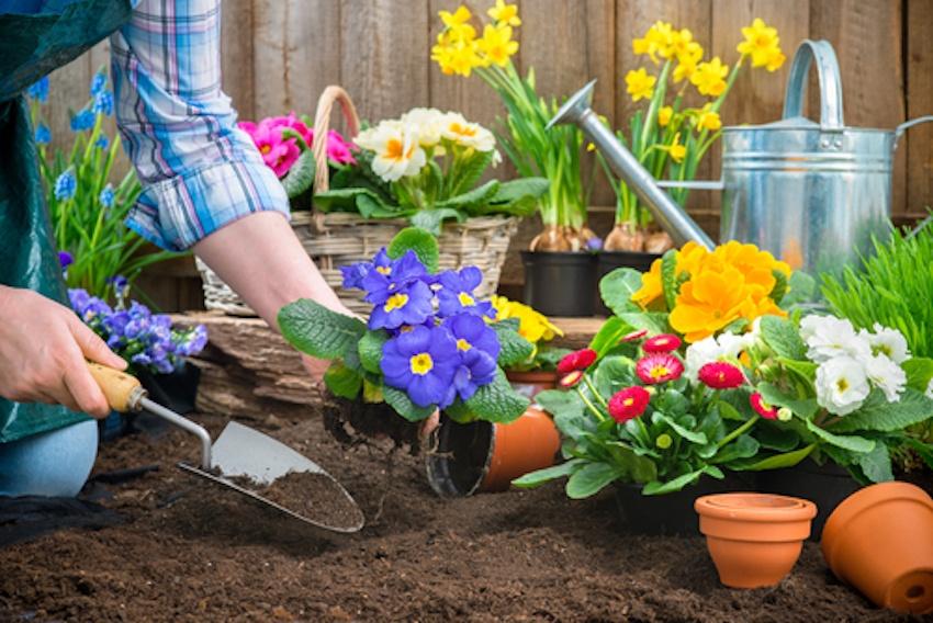 Растения цветы для огорода