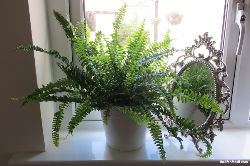 Six House Plants that Clean the Air in My Home