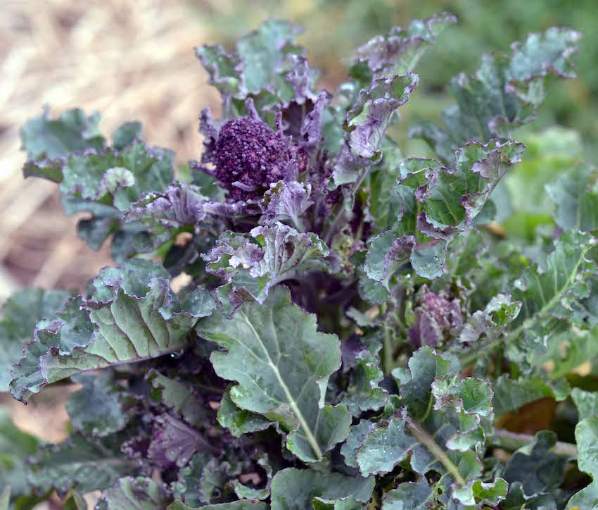 Grow Your Own Tips from Dee of Award-Winning Greenside Up