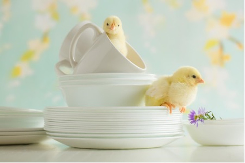 Embrace Spring With These Cooking Tips From World Kitchen