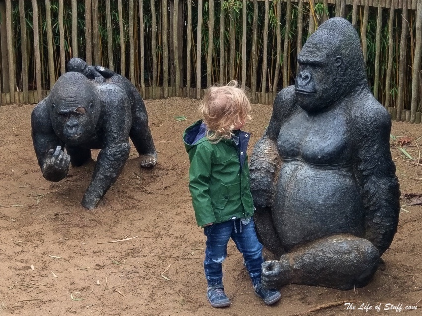 Cultural, Educational, Fun Things to Do for Toddlers in Dublin -Dublin Zoo