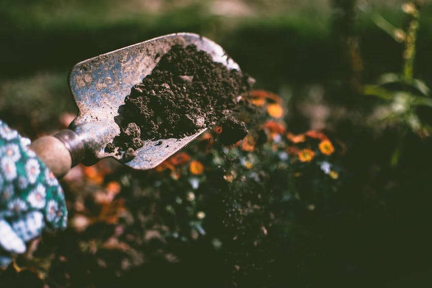 Gardening Tips - Preparing Your Garden for Autumn and Winter - Compost