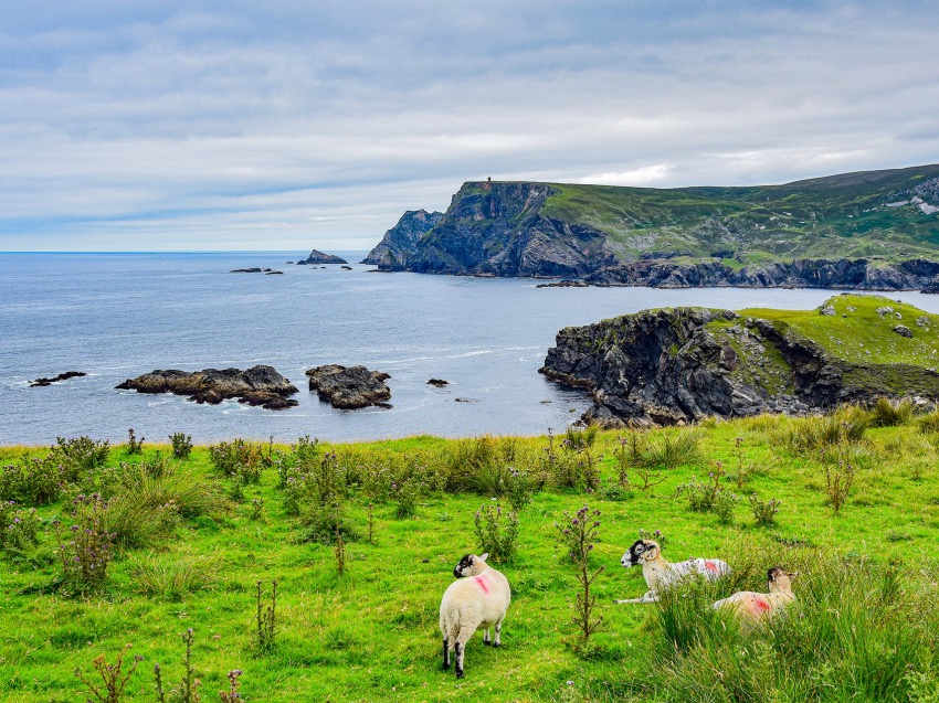 The Life of Stuff - Travel Tip – 3 of the Best Souvenirs from Ireland